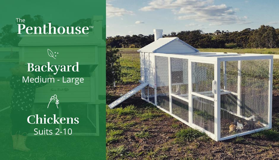 penthouse chicken coop fits 2 to 10 hens