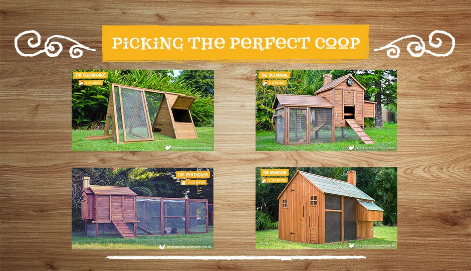 Different chicken coop options and ideas