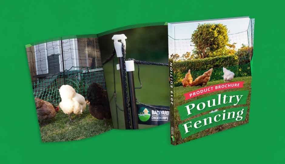 Poultry Fencing for Backyard Chickens
