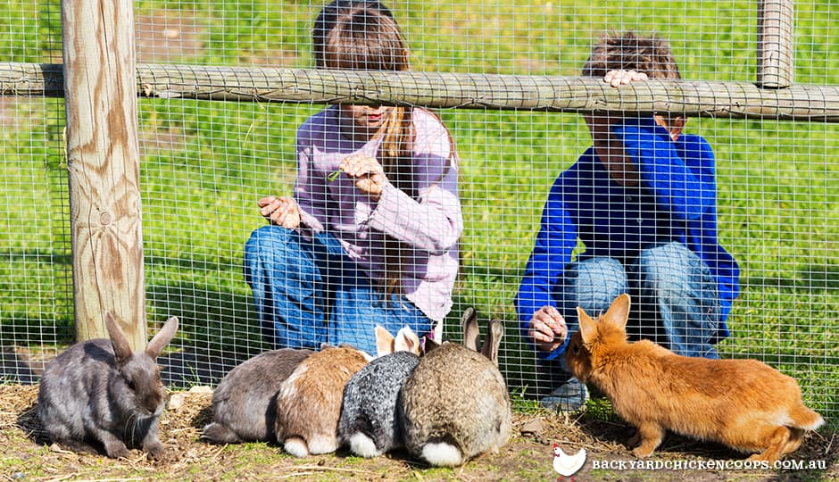 children looking at rabbits through fence