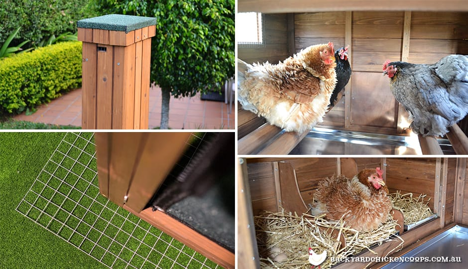 requirements for a chicken coop