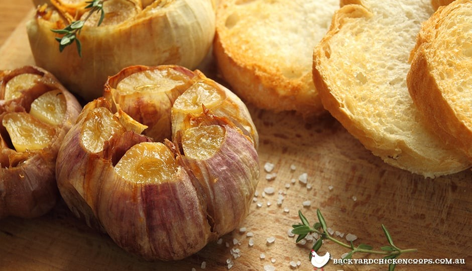 roast-garlic-is-easy-to-make-and-delicious
