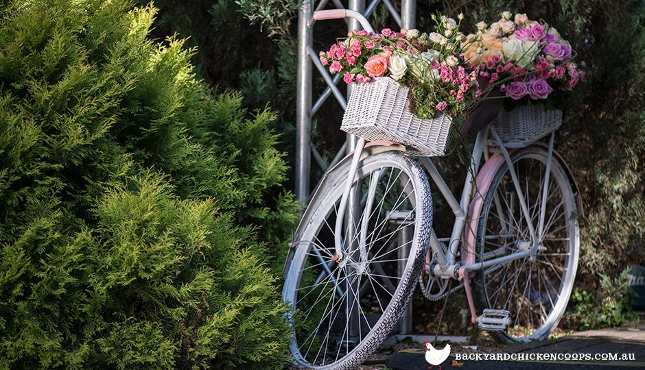 roses-in-bicycle