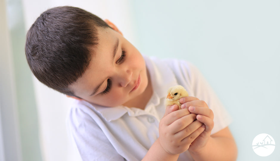 school student child holding baby chick