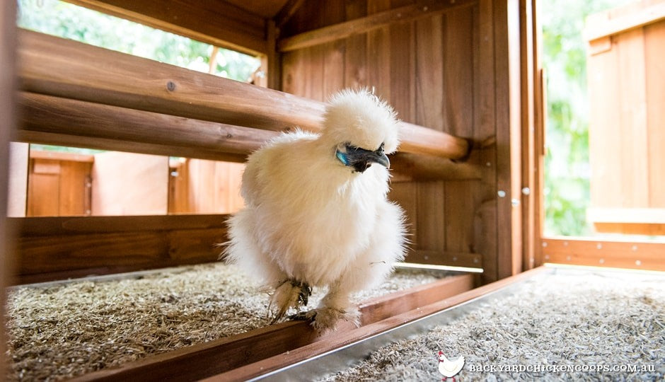a good chicken coop is made of timber, with perches for roosting at an appropriate height