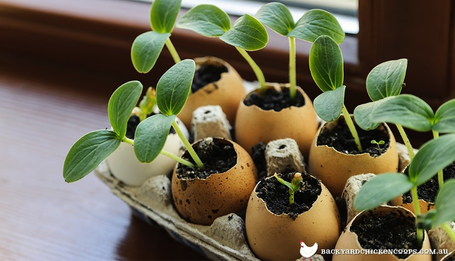 eggs make ideal flowerpots for small sprouts