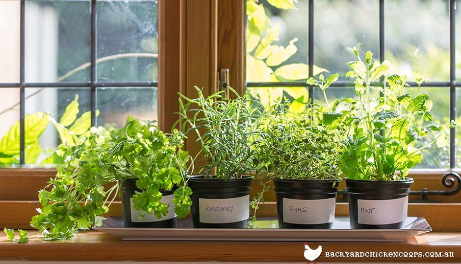 summer-herbs-on-windowsill
