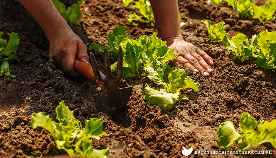 sustainable-organic-gardening