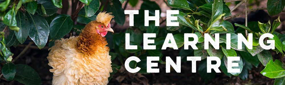 the backyard chicken coops learning centre
