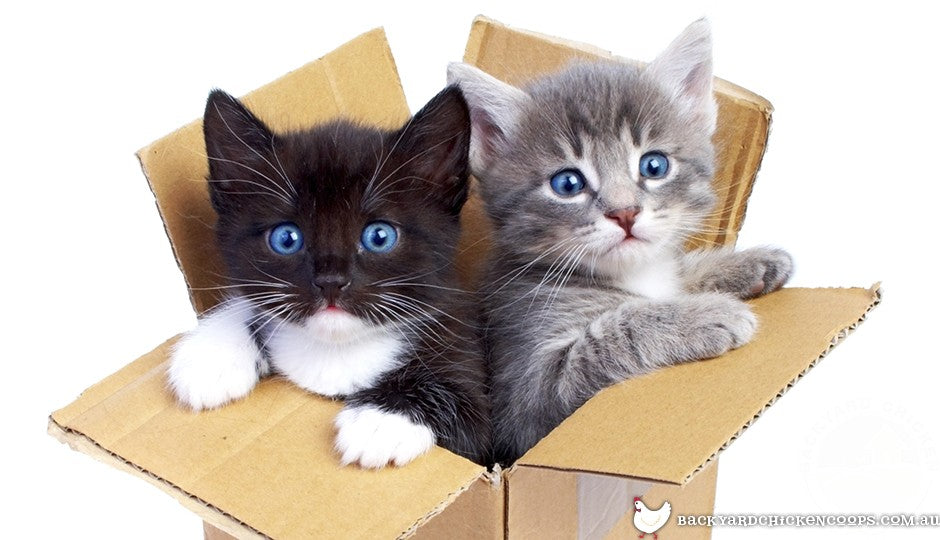 Two kittens in a box
