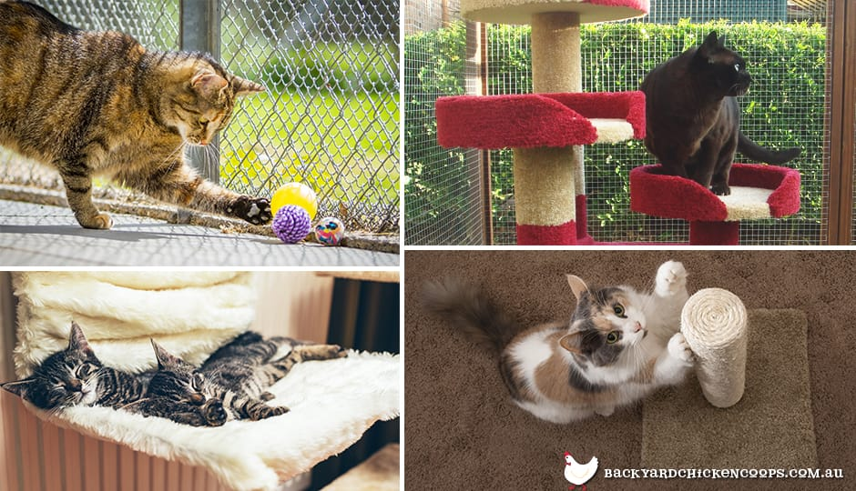 Various activities for cats to be entertained