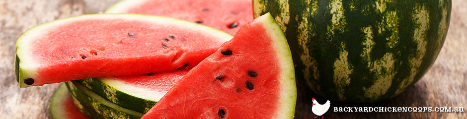watermelon-is-a-top-fruit-to-grow-in-spring