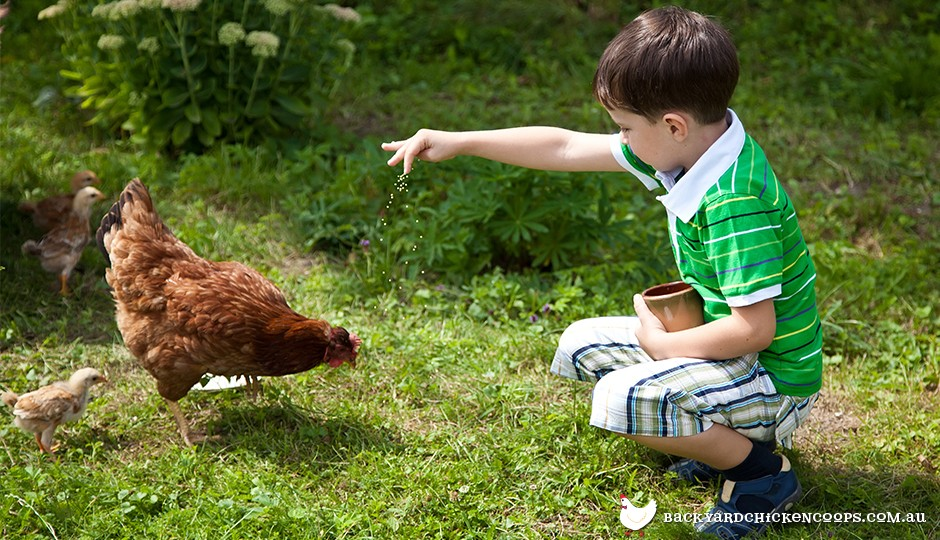 Kids can learn a lot from feeding and caring for backyard chickens