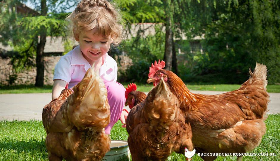 Young girl chatting with isa brown chickens
