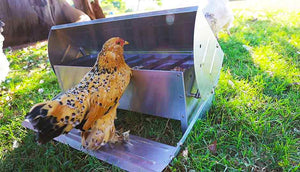 Free-range Chicken Feeder & Drinker