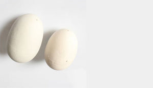 Brood Eggs – Painted Wooden Eggs for your Nesting Box