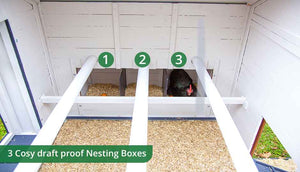 hen laying in penthouse coop nesting boxes