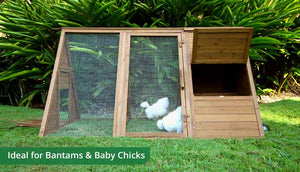 cluck house chicken coop with nesting box door open and silkie hens inside