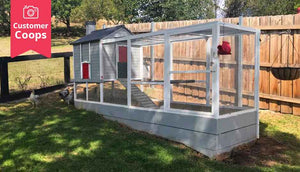 Grey and red painted chicken coop
