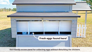kid friendly nesting box panel to collect eggs without disturbing chickens