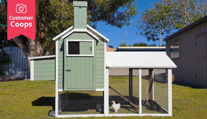 green painted chicken house with run