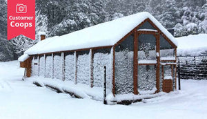 customer mansion chicken coop and extended runs covered in snow
