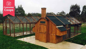 mansion chicken coop with extended run area for extra space