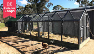 customer mansion chicken coop and double run painted dark grey