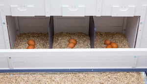 eggs inside chicken coop nesting boxes with hemp bedding