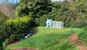 poultry fencing with the penthouse coop on green garden landscape