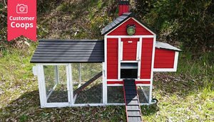 red painted customer coop with white accent colour