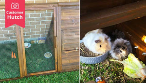 customer piggy pen with 2 guinea pigs