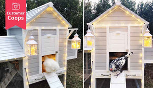 pretty chicken coop with lanterns