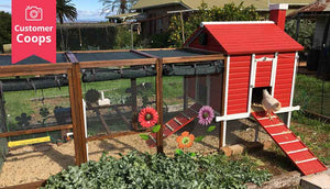 red painted coop with white accent colour in garden