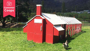 back view of red painted chicken coop with white roof and extended runs