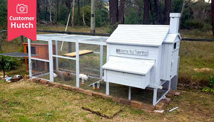 painted white rabbit den enclosure