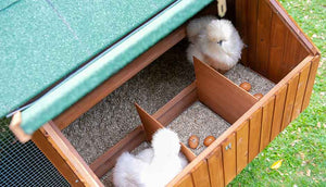 silkie chickens in mansion chicken coop nesting box