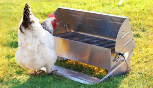 white sussex hen using treadle feeder and drinker