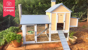 yellow taj mahal chicken coop with wire mesh flooring