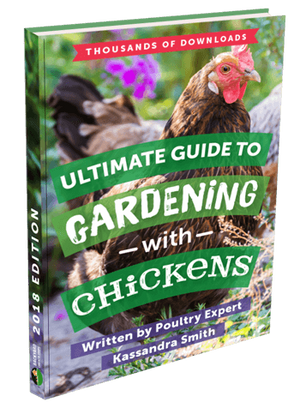 Ultimate Guide to Gardening with Chickens eBook
