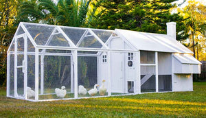 white painted chicken coop and run with silkie and ducks inside