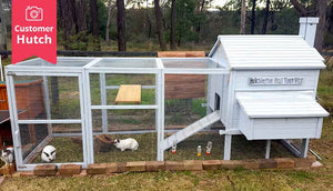 side on view painted white rabbit hutch