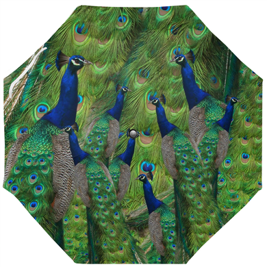 Peacock Umbrella - Peacock Feathers and Peacocks