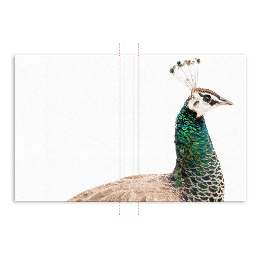 Portuguese Peacock Journal: Scott Herndon Photography