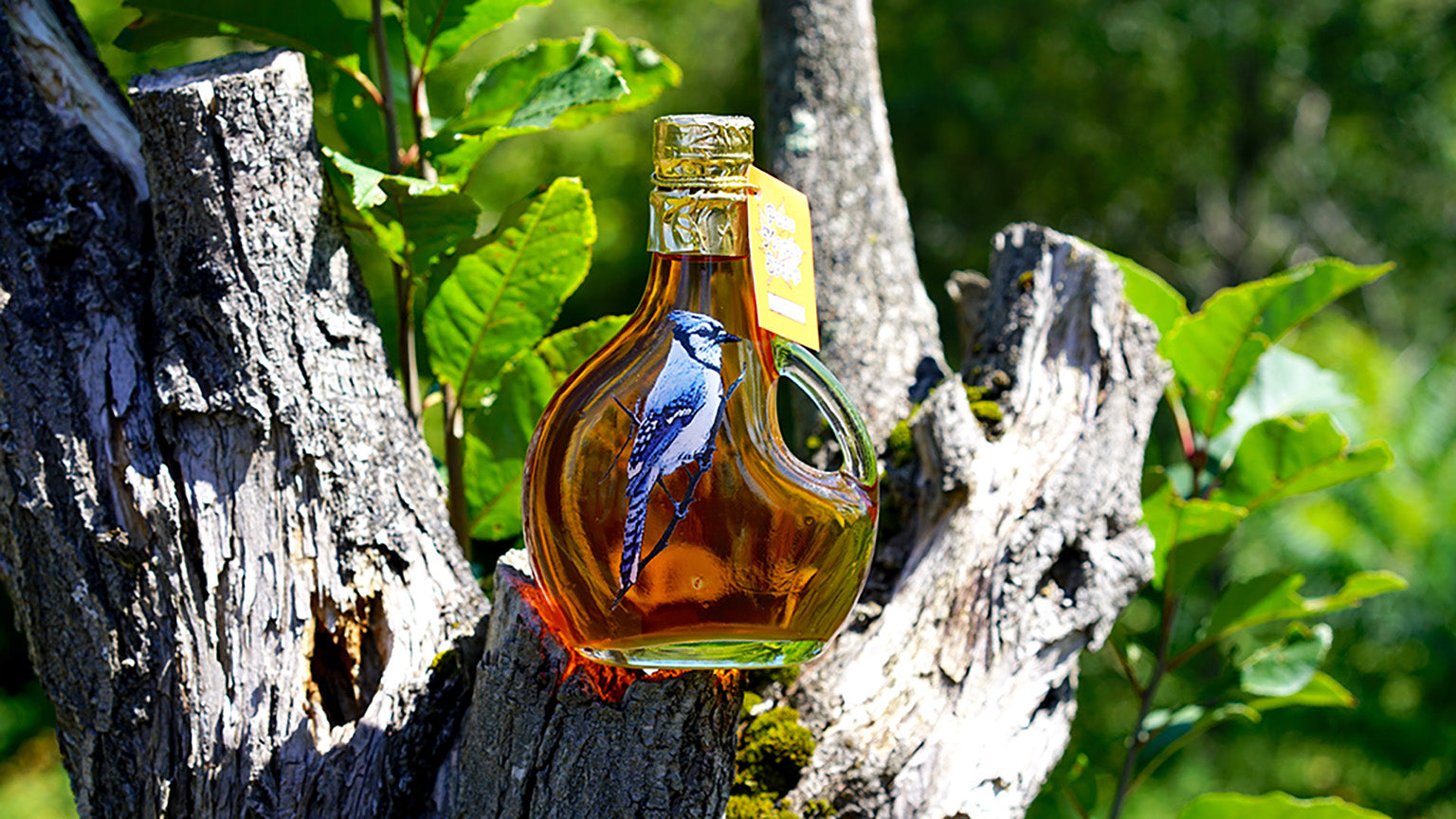 Blue Jay 250ml Glass Bottle Maple Syrup