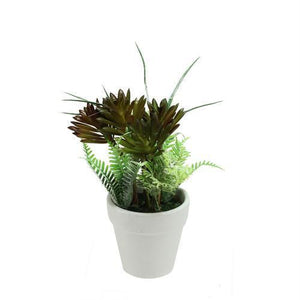 "7.5"" Artificial Green and Red Succulent and Fern Spring Decoration in a Round White Pot"