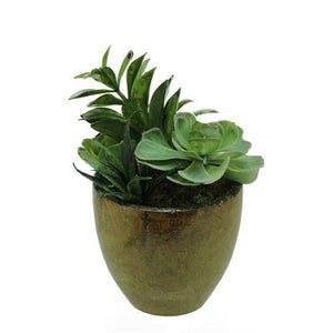 "8.5"" Artificial Mixed Green and Red Succulent Plants in a Decorative Brown and Black Pot"