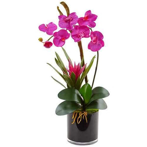 Orchid and Bromeliad in Glossy Black Cylinder Silk Arrangement