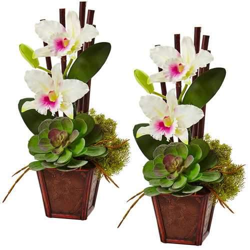 Cattleya Orchid and Succulent Arrangement (Set of 2) Silk