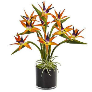 Bird of Paradise in Black Glossy Cylinder Silk Arrangement